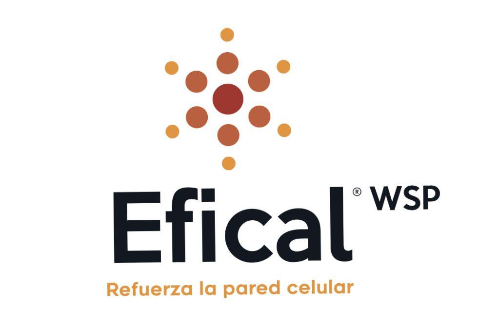EFICAL WSP – Para asegurar mayor firmeza y calidad postcosecha