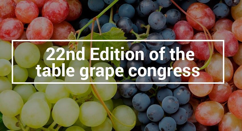 Daymsa present at the Bari table grape congress