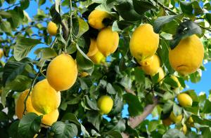 daymsa citricos