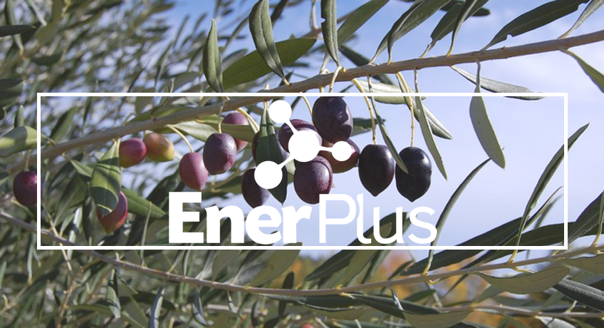 EnerPlus® in olive groves, higher yield and early harvest